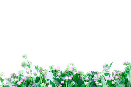 Goat Weed In white background. Blank space for text. Select focus. Stok Fotoğraf