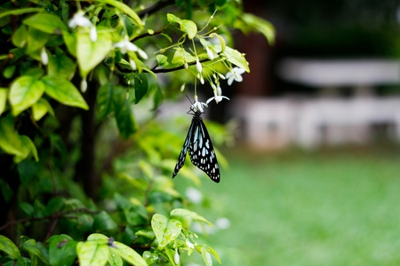 Butterfly eat Nectar Stock Photo - 16559245