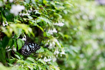 Butterfly in garden Stock Photo - 16559228