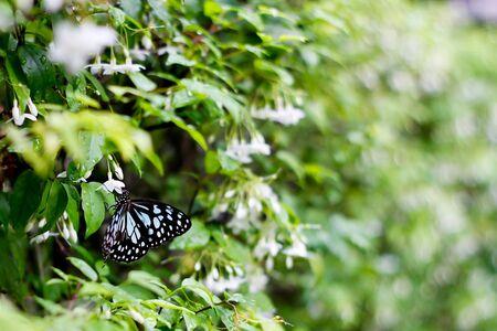 Butterfly in garden Stock Photo - 16559228