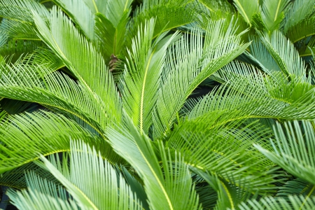 fronds: Tree