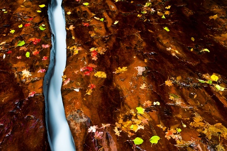 zion: Small creek with fall-color leaves