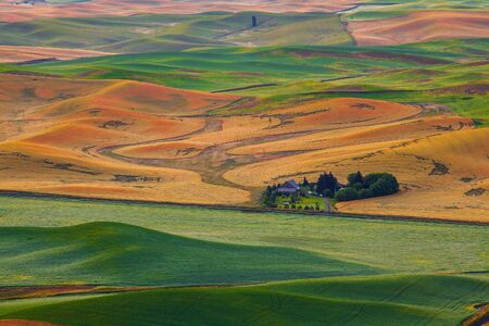 An old bard in the middle of wheatland at Palouse, WA