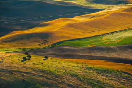 palouse: Wheat land at sunrise, Palouse, WA