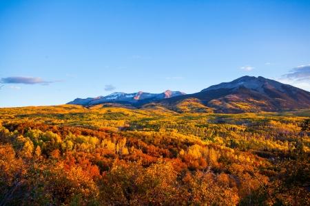 Forest of fall color tree at sunset from Kepler pass, Colorado