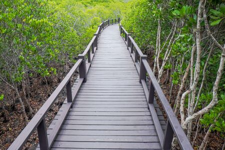 lightsome: Mangrove forest with wood bridge walk way Stock Photo