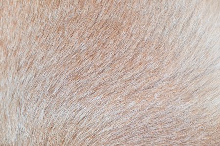 pelt: Brown fur for background. Stock Photo