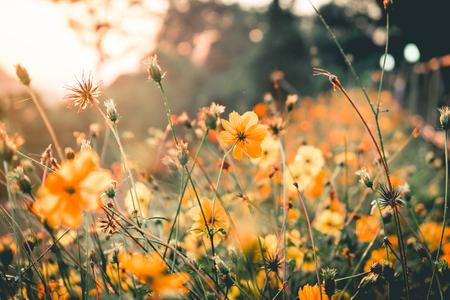 Jaune nature fleur dans le morning.Vantage ou le ton rétro.