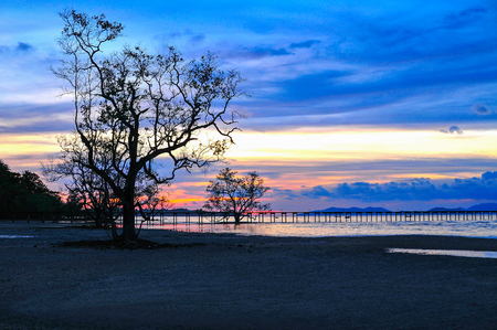 silhouette Alone Tree and Wood Port  Red  Blue Sky Twilight  on the beach Stock Photo