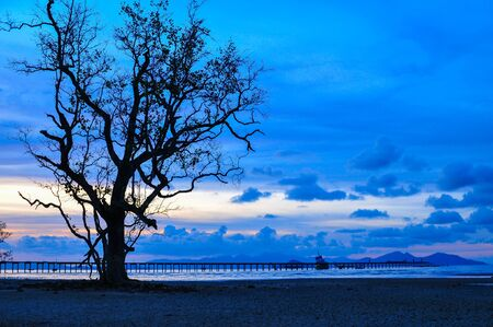 Alone Tree and Wood Port  Red  Blue Sky Twilight  on the beach