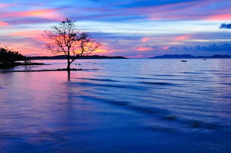 Alone Tree with Red  Blue Sky Twilight  on the beach Stock Photo