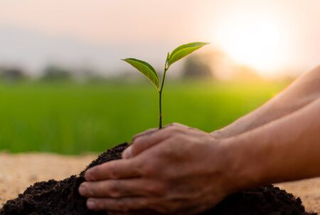 Young man carried the tree and planted it in the soil prepared during the evening sunset, Reduce global warming and increase the amount of oxygen in the air Concept.