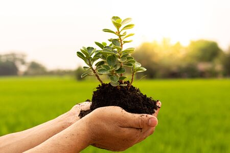 Conservation of world resources, Hand of a mans holding a tree to prepare for planting in the ground, Planting trees is adding oxygen to the air, Save world save concept.