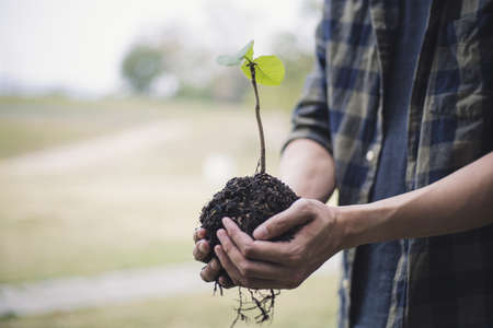 Young man was holding a seedling to prepare to plant a tree, Preserving or loving the environment or maintaining the soil, Planting trees to add oxygen to the air, Save world save life concept. Stock fotó