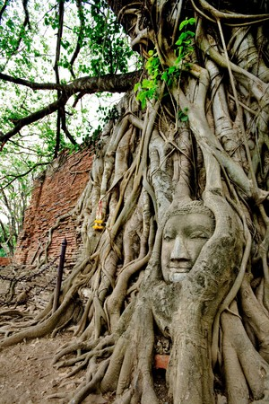 Tree and Buddha, Historical Park Ayutthaya, Thailand photo