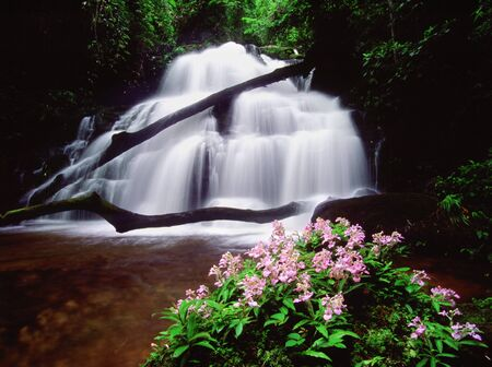 Eignameongkorn Orchid, Mandeang Waterfall, Thailand