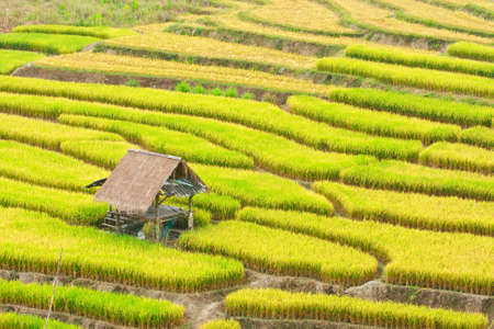 Terraced rice on Mountain, Chiangmai Province, Northern of Thailand photo