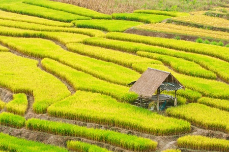 Terraced rice on Mountain, Chiangmai Province, Northern of Thailand
