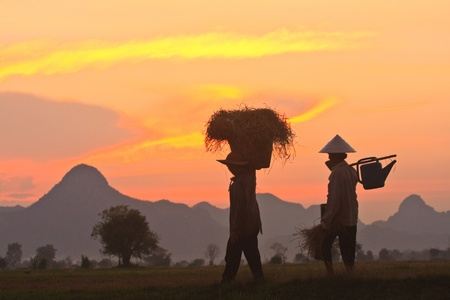 Thai farmers back to go home in the evening