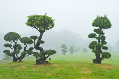 Bonsai trees are in the mist