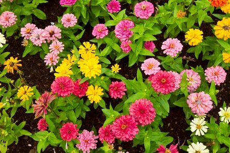 Multi Color Flower