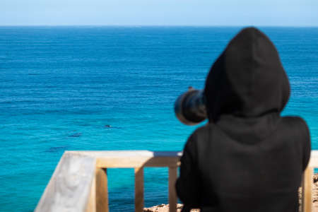 Person taking pictures of whales at the ocean with a zoom lens on a camera. Group of whales, blurry person at foreground with black clothes. Nature observation. Head Bight, Nullarbor, South Australia 写真素材