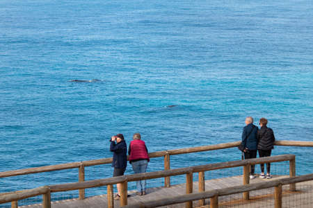 Group of senior people watching wales from an observation platform. Two aged couples on holidays. Man using binoculars. Nature observation. Head Bight, Nullarbor, South Australia