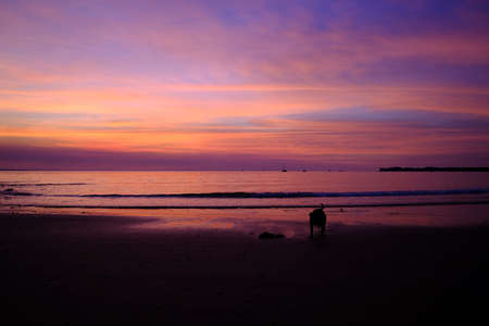 Dog at the beach for its daily walk at sunset time, blue hour. Boats at the horizon. Amazing vivid blue and purple colors, no filters. Fannie bay, Darwin, Northern Territory NT, Australia, Oceania