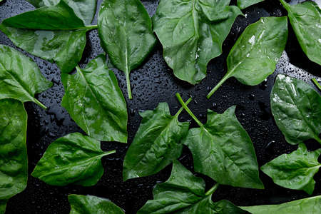 Fresh spinach with rotating on black background.