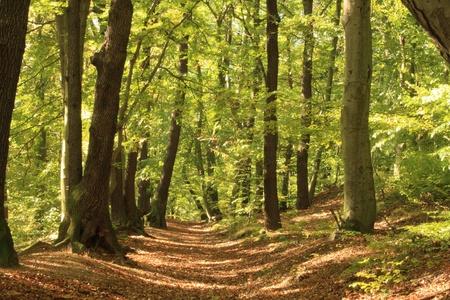 natur: foresta Archivio Fotografico