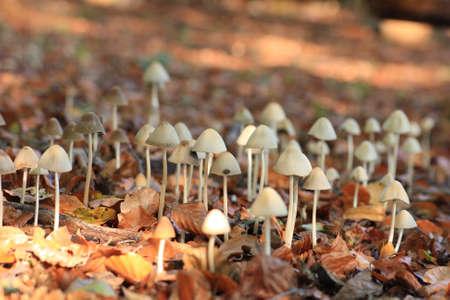 natur: mushrooms Stock Photo