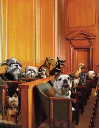 Hond Jury Stockfoto