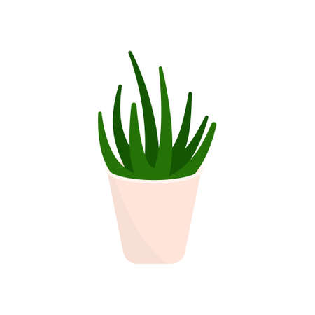 Decorative houseplants. Plants and nature homemade flowers in pot interior decoration in flat cartoon style. Vector illustration eps