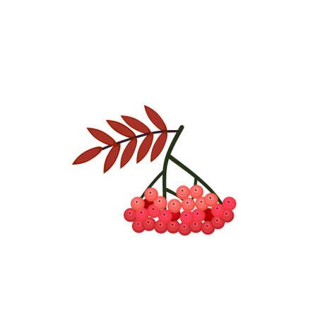 Rowan berries. Isolated rowan on white background Vettoriali