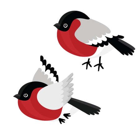 A set of sitting and flying the bullfinch isolated on white background. Sample of poster, party holiday invitation, festive banner, card. Vector cartoon close-up illustration.