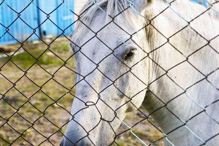 beyond: White horses head beyond a metal net