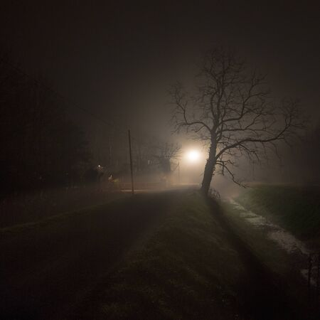 A tree is on a dark path. The backlight creates a strong contrast. The strange and mysterious tree creates a shadow on the ground. The image is terrifying and creepy. You see a path that goes to the light and gets lost in the fog.