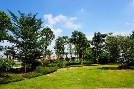 greening: Landscaping trees Stock Photo
