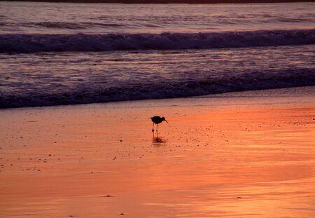 Lone Shorebird Stock Photo