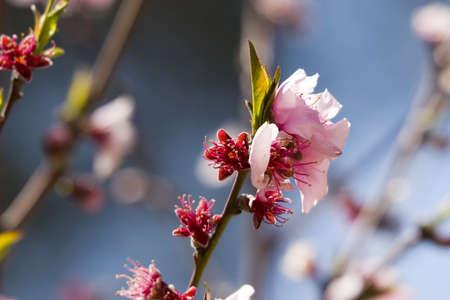 A Tree blossom