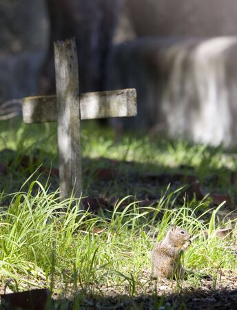 A Squirrel praying at the cross