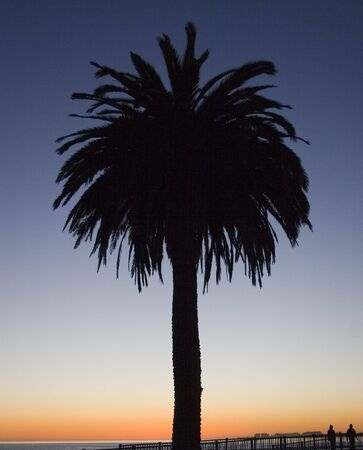 A Palm tree at Sunset
