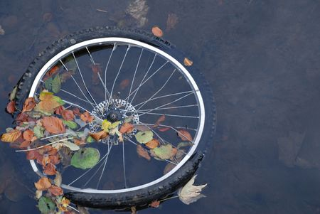 throwaway: A bicycle wheel discarded in a park pond