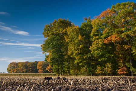 Landscape of a farmland with colorful autumn trees on a sunny day photo