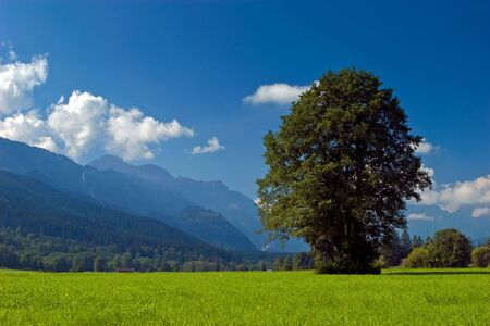 Landscape of grassland with trees and mountains on a sunny day photo