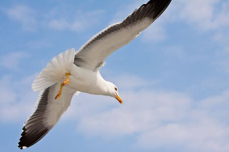 Seagulls flight on sunny day, with blue sky photo