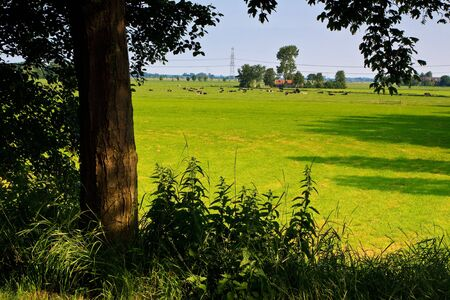 Countryside with farm and grazing cows on a grassland Stock Photo - 5195270