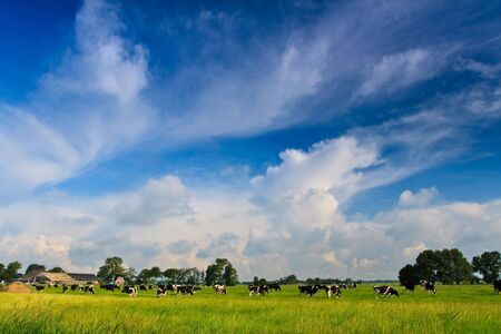 Countryside with farm, cows and a grassland against blue sky Stock Photo - 5208478