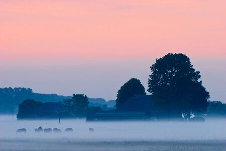 Farm and trees with horses in the countryside in the early morning fog