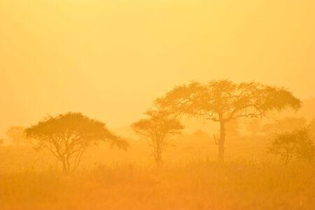 Landscape of a forest in orange morning mist